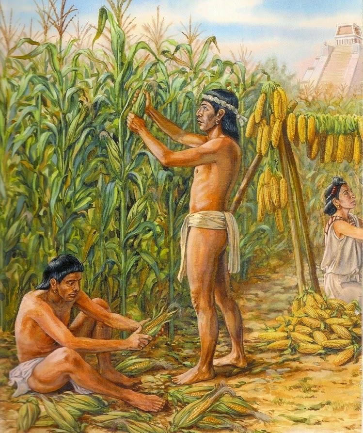 los-arawacos-en-venezuela-11