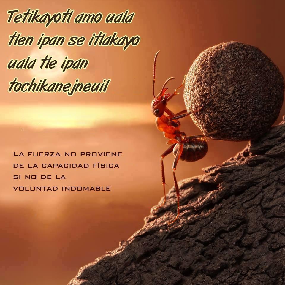 Las poesias de los nahuatl