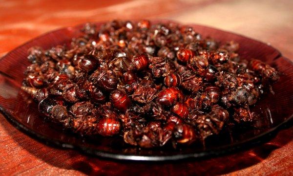 hormigas culonas comida tipica de Santander