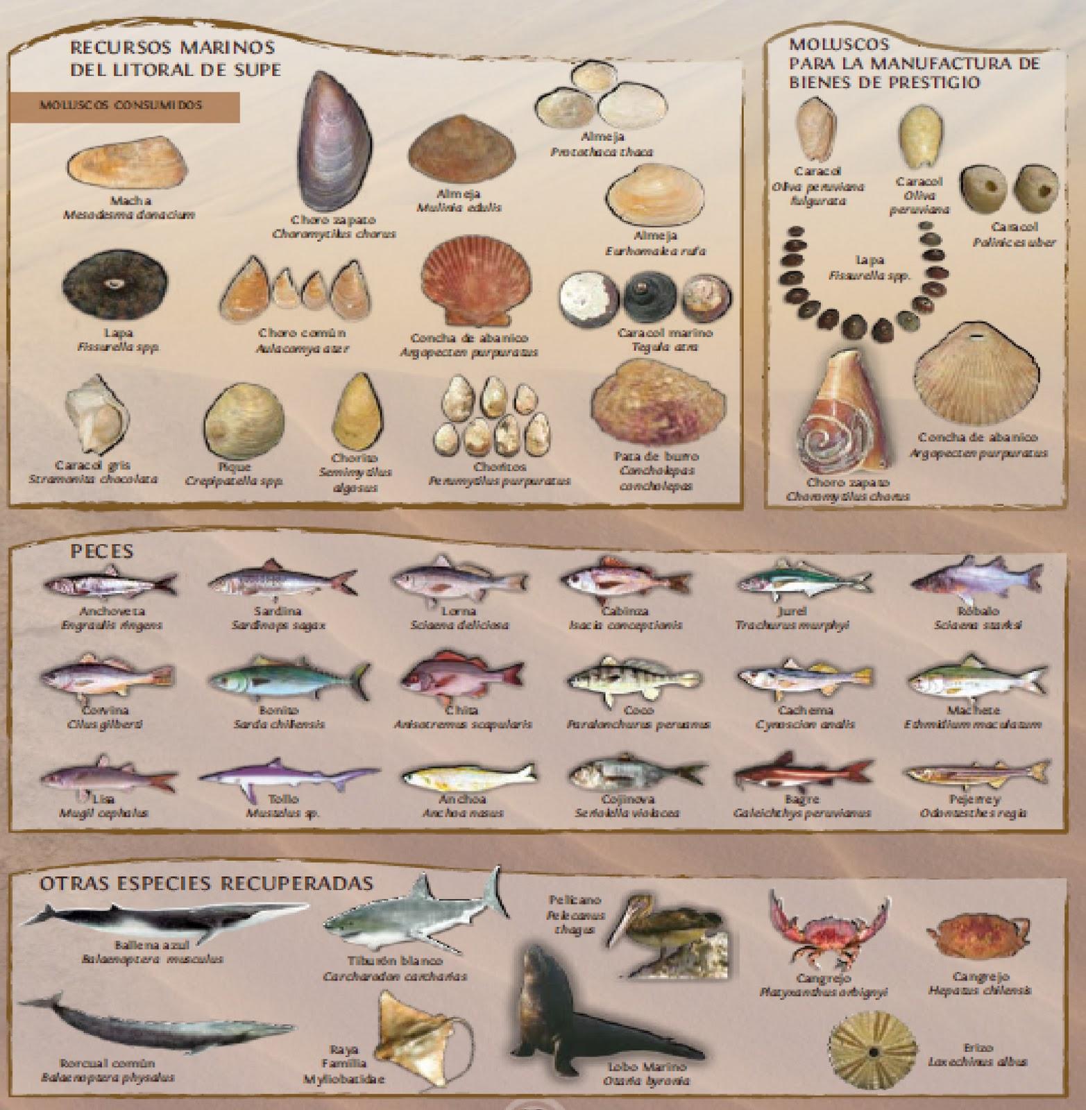 Cultura Chavin alimentos