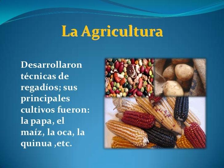 Agricultura de la Cultura Chavin: