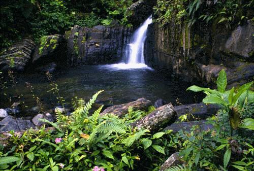 cultura de Puerto Rico en sus patrimonios naturales