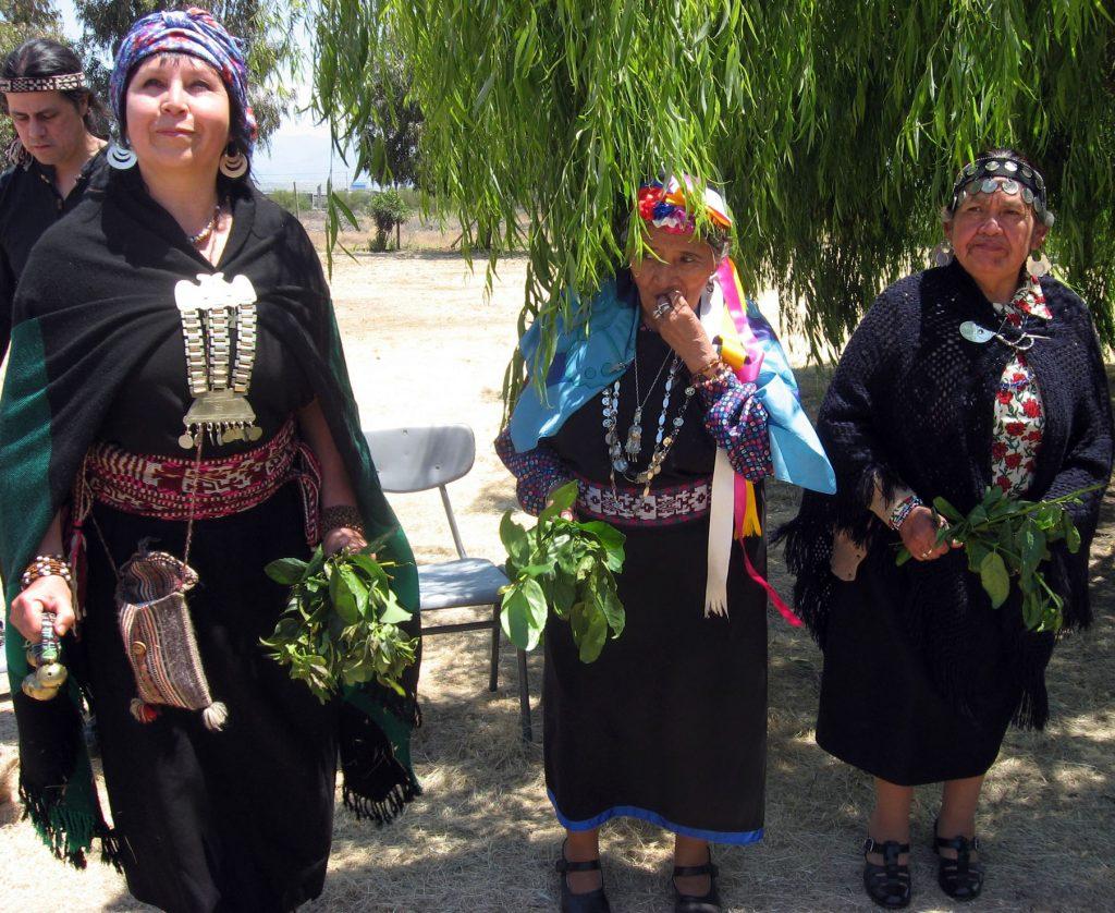 mapuche medicina