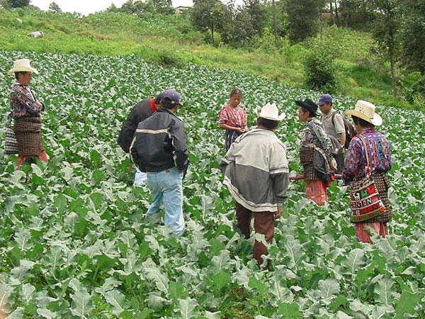 agricultura xinca