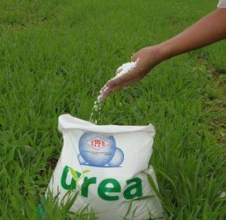 Fertilizantes de urea: formula, aplicación, y más