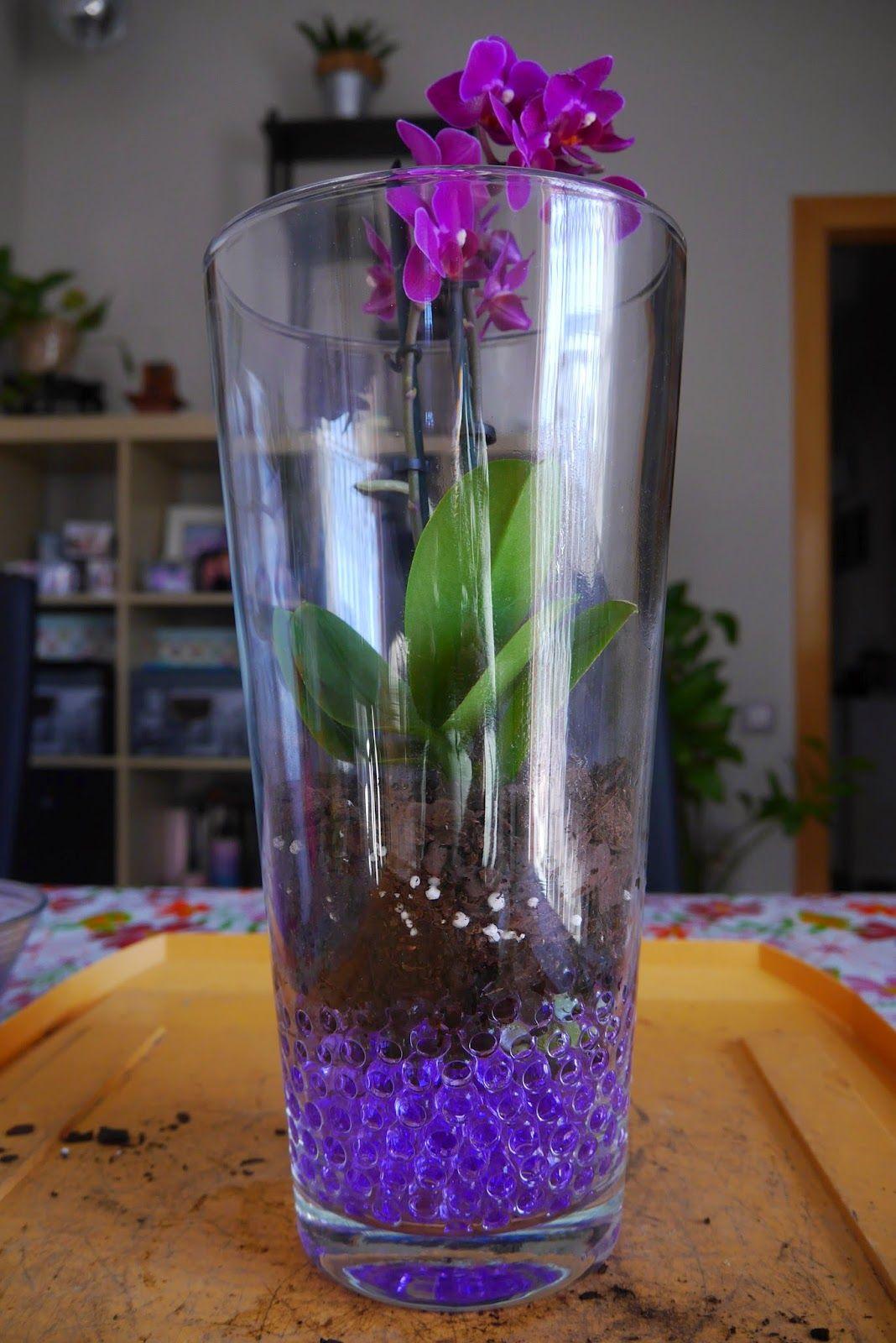 como sembrar orquideas