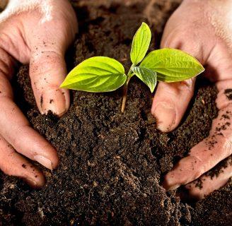 Fertilizantes: Tipos, Foliares, Líquidos, y Más