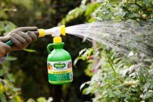 ¿Sabes que son Fertilizantes foliares? aprendelo aquí