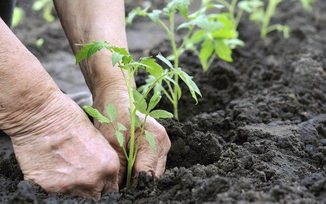 fertilizante con nitrogeno