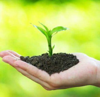 Tipos de fertilizantes: organicos, caseros, químicos, y más