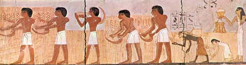 Agricultura Egipcia