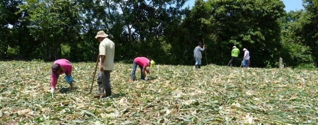 Agricultura De Subsistencia Definición Características