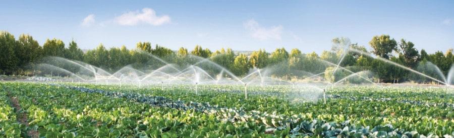 agricultura de regadío 1
