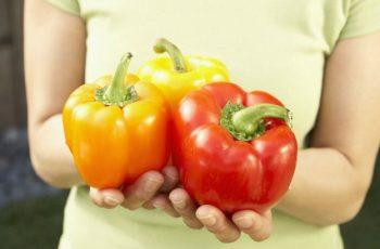 Como sembrar pimientos