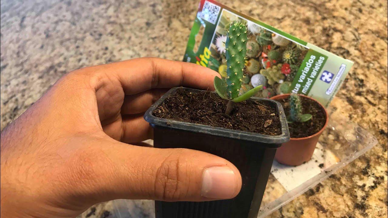 como sembrar cactus 2