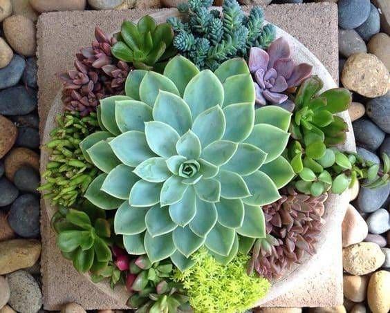 como sembrar cactus 6