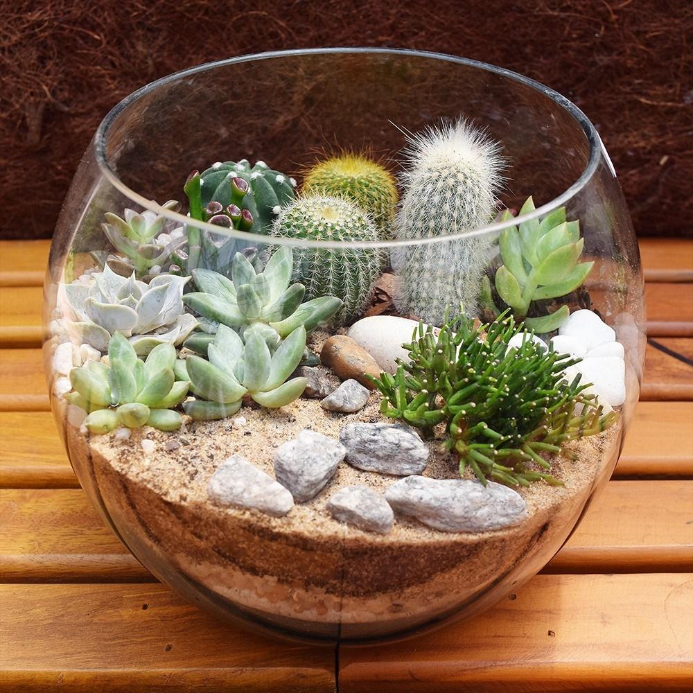 Aprende todo sobre como sembrar cactus for Informacion sobre el cactus