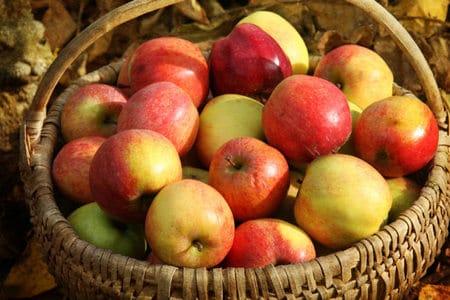 Sabe como sembrar manzanas desc bralo aqu for En cuanto tiempo se cosecha la tilapia