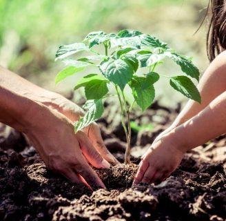 Aprende todo sobre como sembrar un Arbol