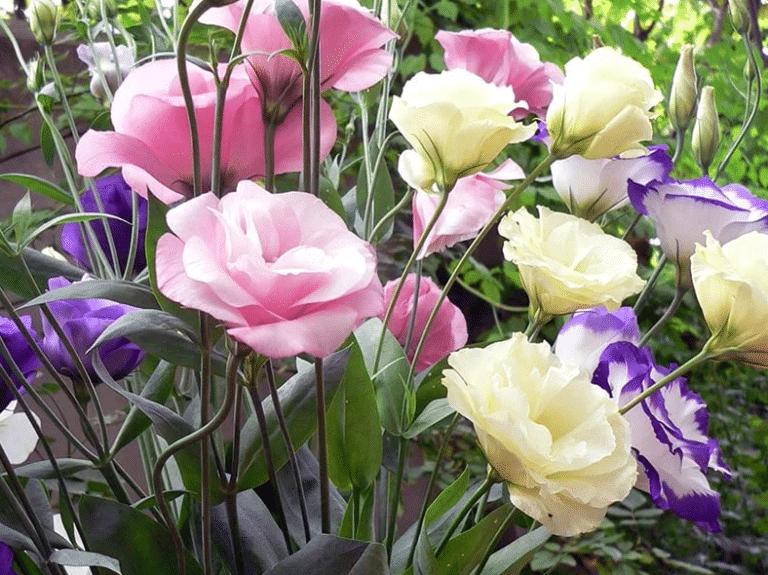 semillas de rosas 20