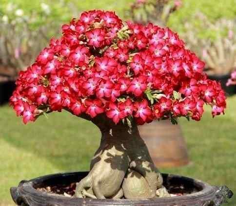 semillas de rosas 2