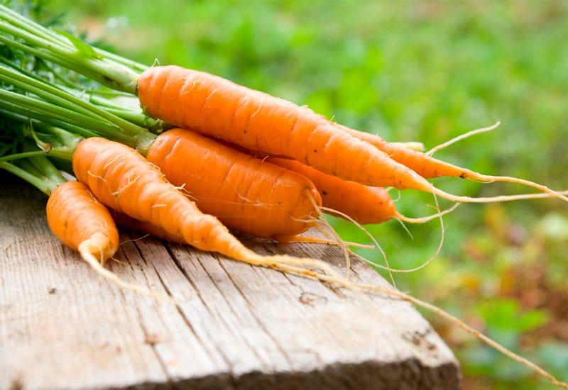 las semillas de zanahoria