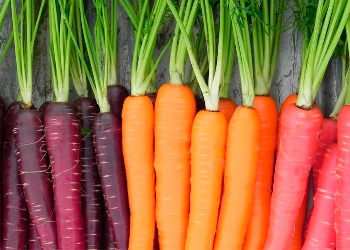 Aprende Todo Lo Relacionado Sobre Las Semillas De Zanahoria Check out zanahoria's art on deviantart. conozcamos las culturas de todo el mundo