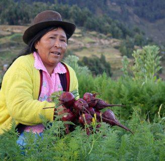 Agricultura en Bolivia: lo que aún no sabes sobre esta actividad económica