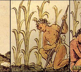 Aprende todo sobre la Historia de la Agricultura y sus origenes