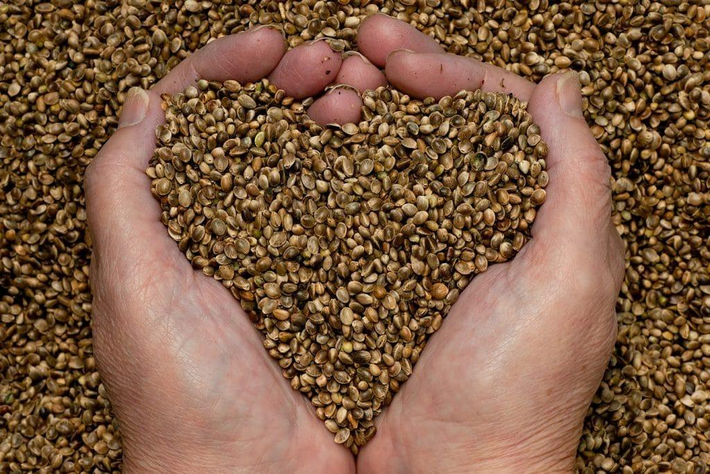 Importancia de la semillas