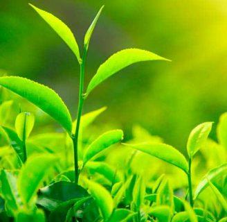 Partes de una Planta: Funciones, cuáles son y más
