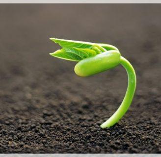 ¿Sabe cuáles son las Plantas con Semillas? Descúbralo aquí