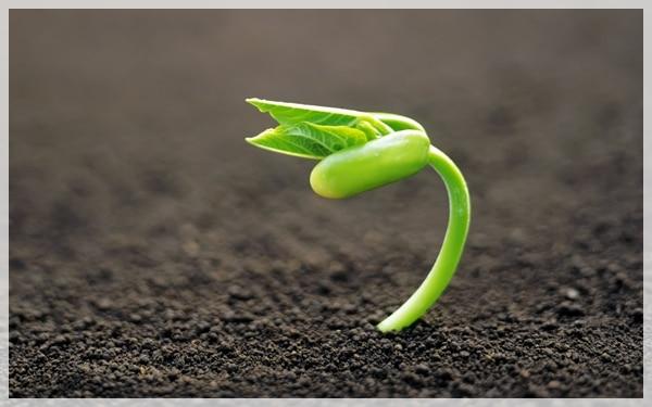 plantas con semillas