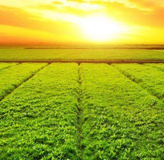 Aprende todo sobre la Agricultura en Argentina y mucho más