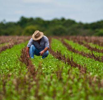 Agricultura en Chile: Historia, importancia, por regiones y más