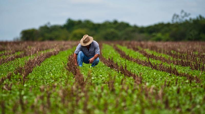 agricultura en chile