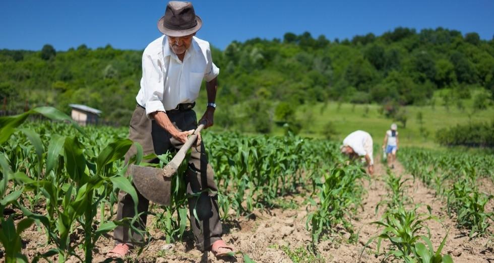 agricultura en colombia 1