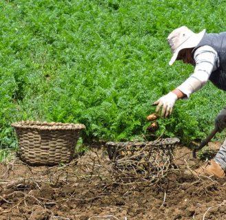 ¿Sabe para que sirve la Agricultura en Venezuela? Descubralo aquí