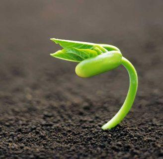 Descubre todo sobre cómo germinar una Semilla y más