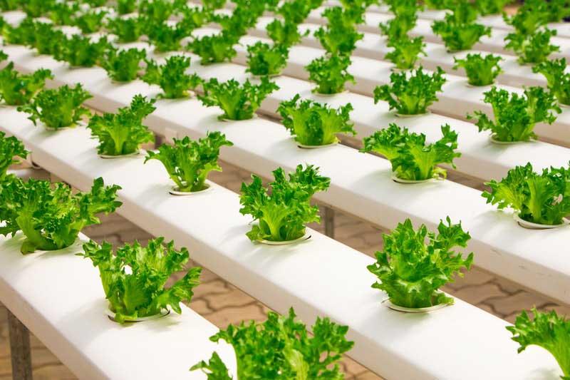 cultivos hidroponicos 1
