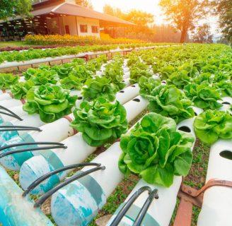 Descubre todo sobre los Cultivos Hidropónicos y su técnica
