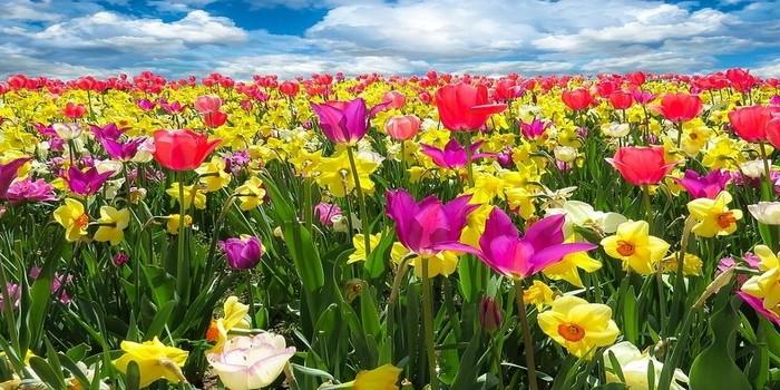floricultura 1