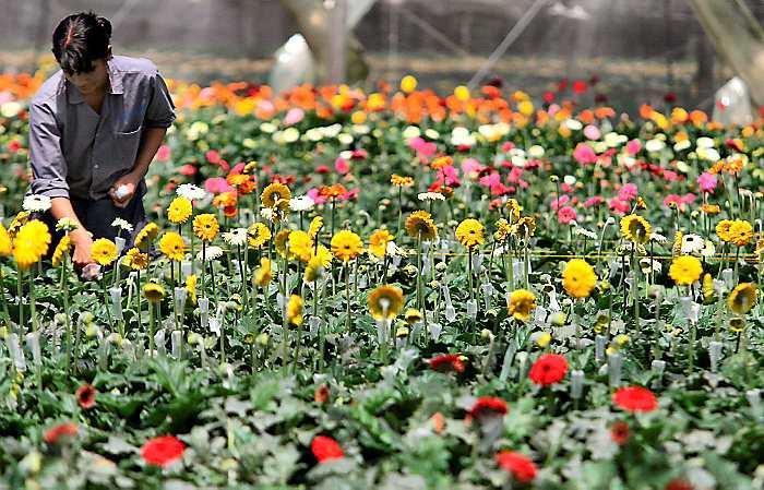 floricultura 7