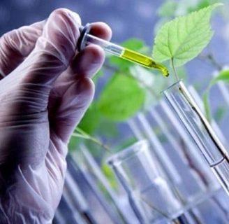 Plantas Transgénicas: Aprende todo sobre ellas y más