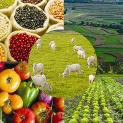 productos agropecuarios