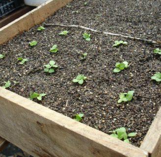 Qué es un semillero: las diferentes formas de hacerlo
