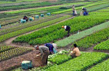 las técnicas agrícolas
