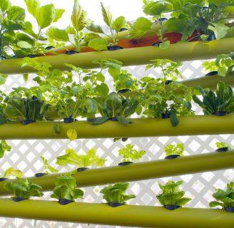 Cultivos Hidropónicos de Lechuga: Características, nutrientes y más