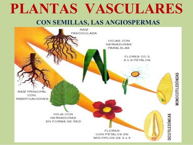 organos de las plantas