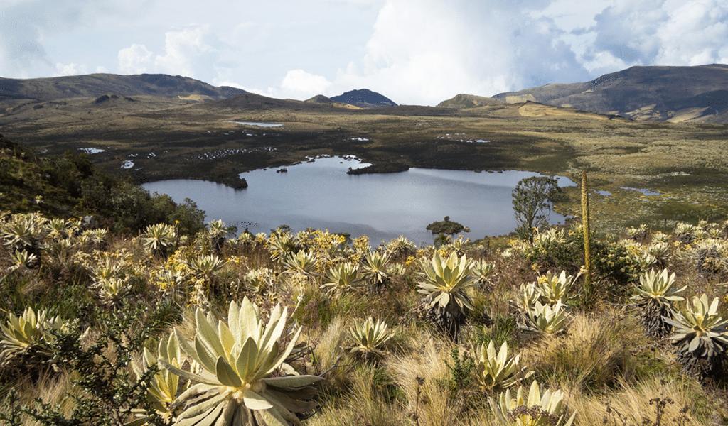 Ecosistemas colombianos 1
